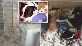 Vystrašení pejsci zemřeli v objetí. Zavřeni byli bez jídla v prádelně plné výkalů a moči 11 dní