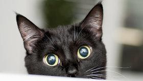 Zbývají 2 dny hlasování v soutěži Kočka Česka: Hlasujte pro svého oblíbence a pomozte útulkům!