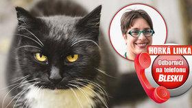 Odbornice na kočky prozradila: Kolikrát denně loví? Jak na správný jídelníček? A proč nám ničí byt?