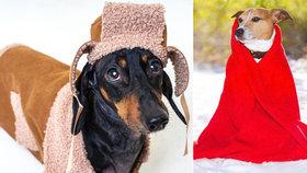 Připravte mazlíčka na zimu: 10 rad, co s packami, kožichem i venčením!