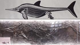 Návštěva z Jurského parku: V Brně ukázali unikátní zkamenělinu ichtyosaura
