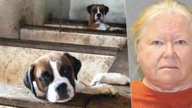 Děsivé odhalení v domě hrůzy: Žena chovala 162 psů. V domě našli 44 mrtvých štěňat