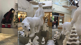 Souložící medvědi šokovali zákazníky na vánočních nákupech: Třetí na ně zvědavě civěl