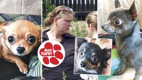 Po utrpení našli nový domov: 24 psů z množírny Ivy Wastlové už má nové majitele