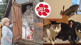 Svůj dům přeměnila v kočičí ráj, teď je v začarovaném kruhu. Azyl Gaia zoufale shání pomoc