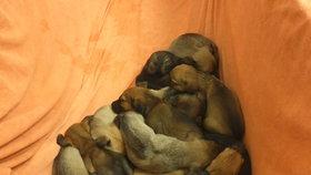 12 kňučících štěňat leželo na mrazu! Z opuštěné budovy v Libni je zachránili strážníci