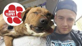 Tyran z Děčína ignoruje soud. Ondrej Hován brutálně zbil svého psa, zlomil mu čelist