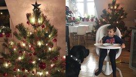 Monika Absolonová je vzorňačka roku! Vánoce už má připravené. Kdo to nestíhá?