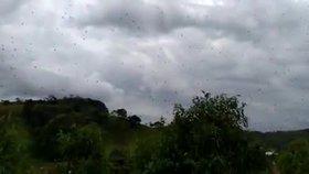 """Z nebe """"pršely"""" stovky pavouků. Podivný úkaz zděsil Brazilce"""