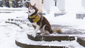 Zima trápí i psy: Jak ochránit tlapky před mrazem a solí