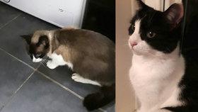 Kočka usnula v bubnu pračky! Majitelka ji zapnula a  začal horor