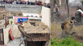 Vesnici vyděsil rozzuřený leopard. Lidé se schovávali na střechách, zvíře nešlo uspat