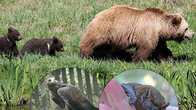 V Malé Chuchli představí ohrožená zvířata v Česku: Vyhynutí hrozí netopýrům, šelmám i orlům