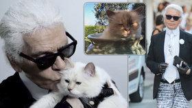 Kočka zesnulého Karla Lagerfelda (†85): Chtěl se s ní oženit, teď bude dědit!