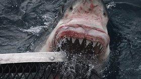 Chlapečka (10) stáhl žralok z loďky: Otec bojoval o jeho život holýma rukama!