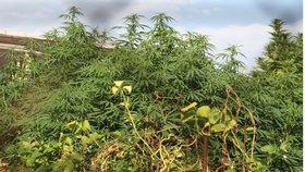 Policisté zasahovali v Blansku, dva bratři tam pěstovali konopí a prodávali nelegální cigarety