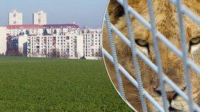 V Rokycanech chová muž lvy v nezkolaudované stavbě kousek od paneláků