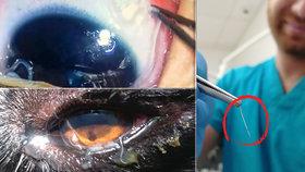 V Česku se objevil oční červ: Kde je riziko největší? Epidemiolog vyjmenoval oblasti