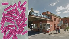 Salmonelóza řádí ve zlínské nemocnici: Po kuřeti s rýží je nejhůř na gynekologii