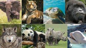 Test osobnosti: Poznejte své vnitřní zvíře a sílu, kterou vám dává!