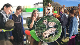 Školáci z Prahy »vydělali« 90 tisíc. Peníze dali záchranné stanici pro zvířata: Byli jsme s nimi na návštěvě
