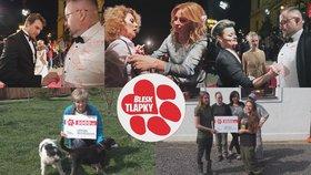 Radost v útulcích! Peníze z aukce Blesku zajistí péči pro štěňata a výběhy pro týrané psy