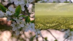 """Peklo pro alergiky: Město zasáhla """"pylokalypsa"""", vzduch se zbarvil žlutě"""