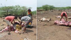 Muž stahoval kůži z krávy. Rozzuření hinduisté ho ubili k smrti!
