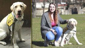 Pes zachránce: Dokáže vyčmuchat glykemický záchvat. Daga vycvičili v Praze, pomáhá Štěpánce (18) v Karviné