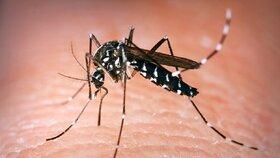 Komár přenášející viry zika a dengue expanduje ve Francii. Pronikl i na Moravu