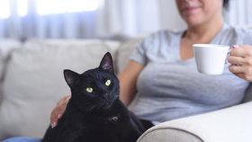 """Máte doma kočku """"v důchodu""""? Tohle podle odborníka nesmíte v péči zanedbat!"""