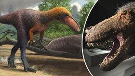 """Vědci popsali nového příbuzného Tyrannosaura: Svému """"bratranci"""" by se vešel do tlamy"""