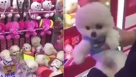 V pouťovém automatu byla mezi hračkami i vyděšená štěňata. Biolog běsnil