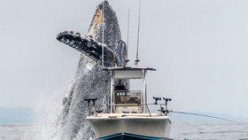 Velryba vyskočila nicnetušícímu rybáři za zády. Jen těsně se vyhnul smrti