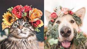 Pes a kocour prodávají květinové věnce na zakázku! Tyhle dekorace jsou hitem Instagramu