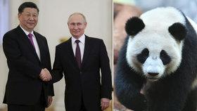 Zvířecí politika: Putin vzal prezidenta na pandy, oba vychvalovali vzájemné vztahy