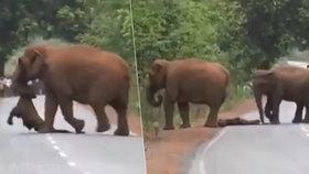 Video, které vám zlomí srdce: Smuteční průvod slonů! Mrtvému mláděti troubili na rozloučenou