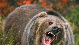 Medvěd v národním parku požíral člověka! Turisté utrpěli šok