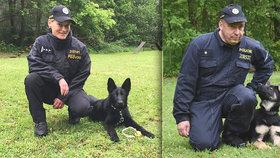 Debie a Bred mají kariéru jasnou: Z roztomilých štěňat budou ostří policejní psi