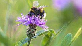 Vosy a včely můžou přivodit silnou alergii! Jak poznáte, že je zle?