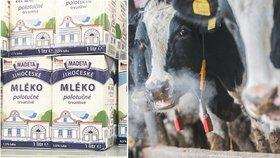 Madeta má výpadek v dodávkách mléka, bude vyrábět méně toho trvanlivého
