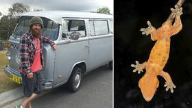 Táta od rodiny z hecu snědl gekona: David 10 dní umíral v agonii!