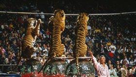 Slavný krotitel zemřel při výcviku tygrů! Rozsápaly ho čtyři šelmy
