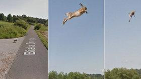 Google Street View auto zabíjelo: Nebohého zajíčka odpálilo do vzduchu