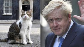 """Vrchní myšilov zůstává: Johnson """"zdědil"""" v Downing Street i hvězdného kocoura Larryho"""