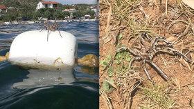 Horor v letním ráji Čechů: Děsivé pavouky slíďáky vyfotili v Chorvatsku na moři i souši