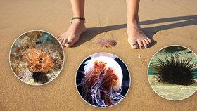 Žraloci, medúzy i jedovaté ryby: Co na vás číhá u moře? Expert radí, na co si dát pozor