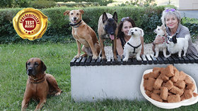 Místo masa voda: I tak se šetří na psích konzervách! Jak chutnaly čtyřnohé porotě?