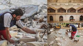 Kočičí muž z Aleppa: Syřan se neúnavně stará o toulavé kočky ve válkou zničeném městě