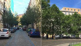 """""""Stromy nemají své lobbisty."""" S jejich výsadbou v ulicích Prahy je problém, pomoci může změna normy"""
